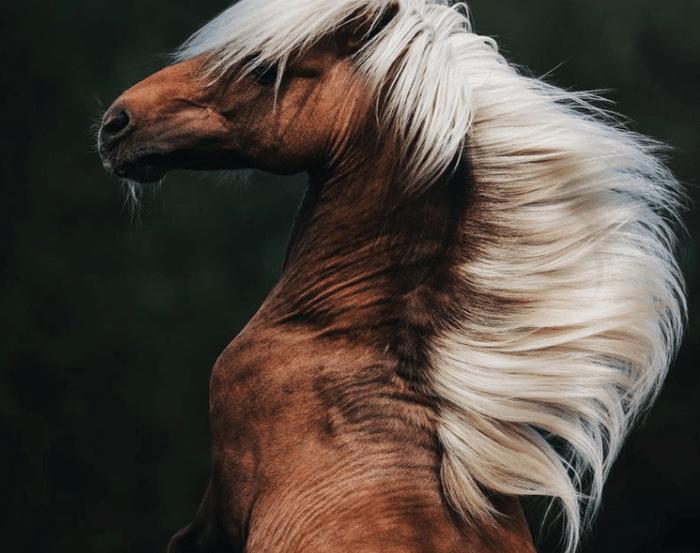 Лучшие фото животных по версии National Geographic