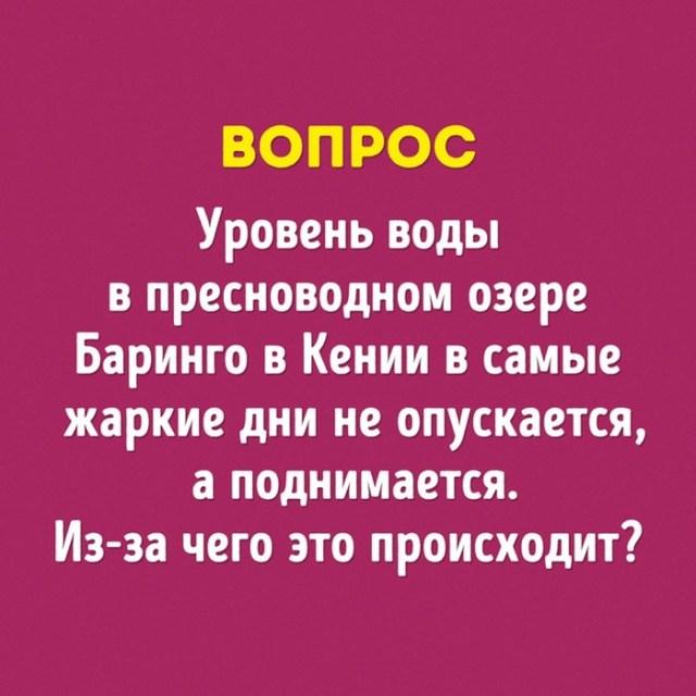 Интересные вопросы «Что? Где? Когда?», на которые несмогли ответить знатоки
