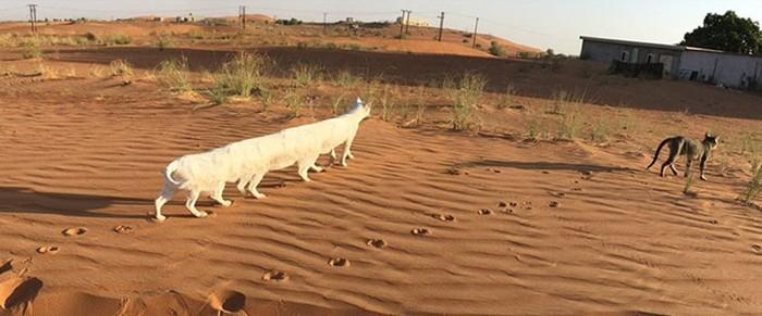 15 неудачных панорамных снимков животных