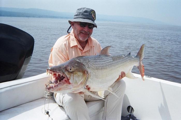 Самая опасная пресноводная рыба Голиаф