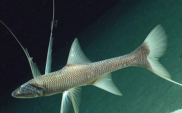 Редкие рыбы с поразительным поведением и необычной внешностью