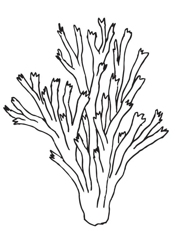 coral coloring pages # 4