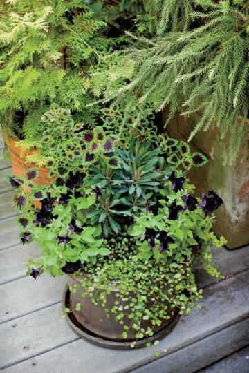 Fall Container Gardening Ideas   Southern Living Eye Catching Purple Pot