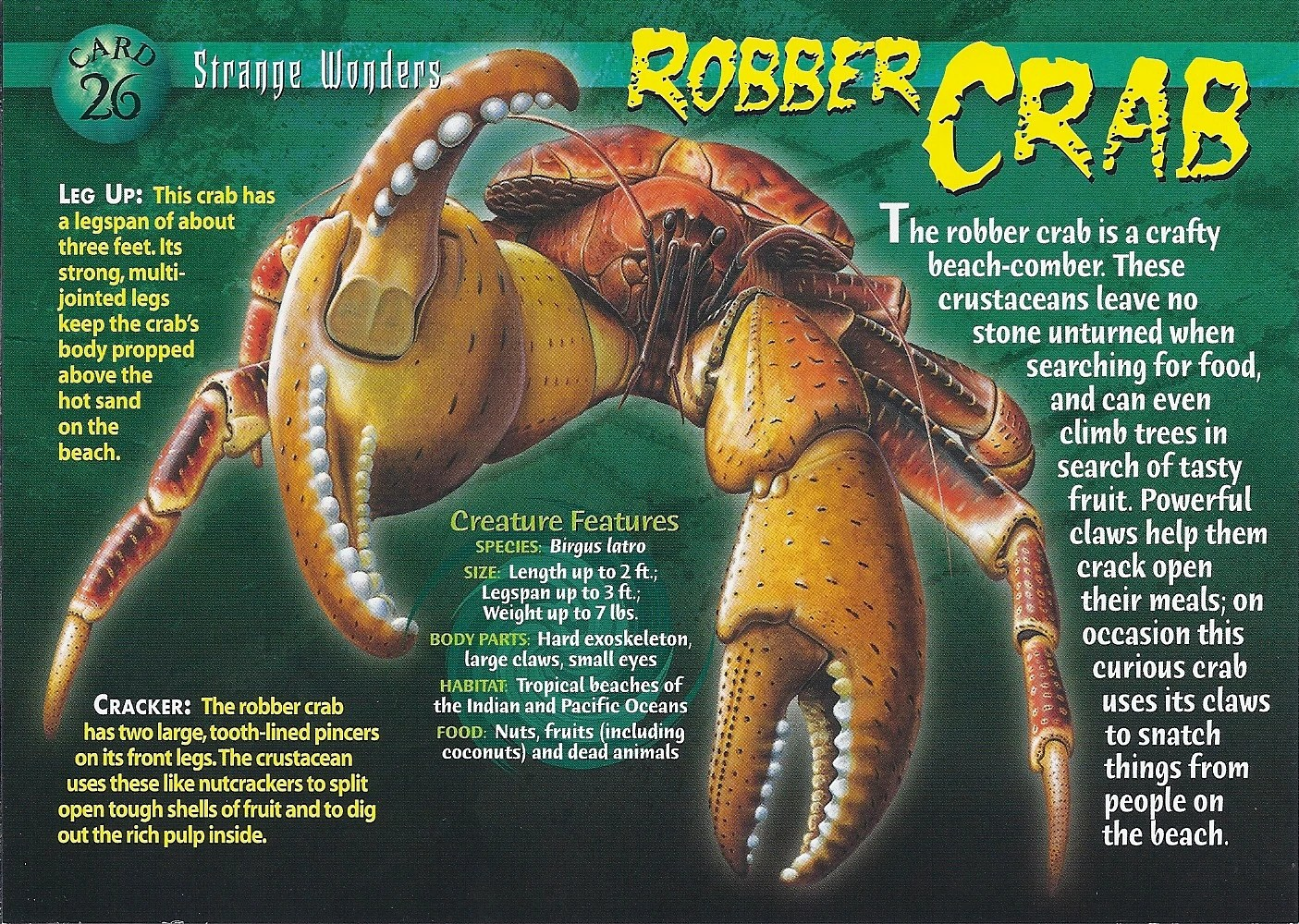 Robber Crab Wierd Nwild Creatures Wiki