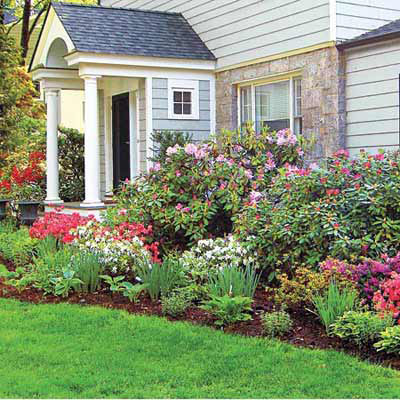 plants and shrubs in yard