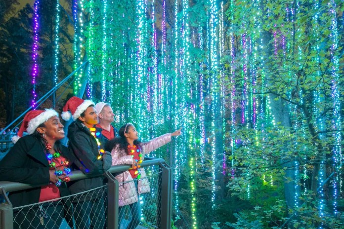Lights take center stage at these botanical garden events
