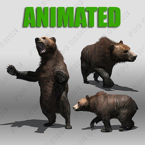 Grizzly Bear Animated 3D Model CGTrader