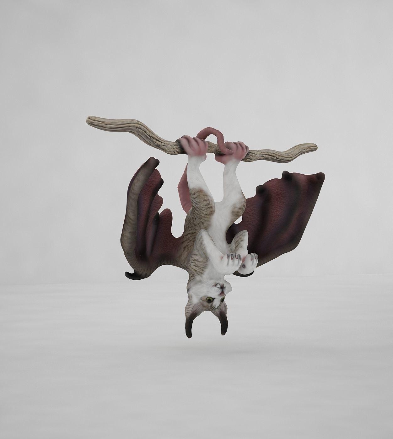3d Model Cat Bat Rat Vr Ar Low Poly Max Obj Mtl