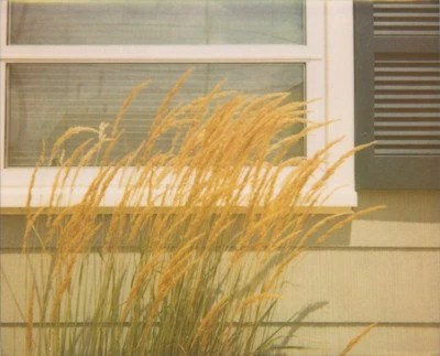Summer Breeze - 8x10 Retro Polaroid Fine Art Print - Seagrass Beach House Bungalow - jenaardell