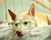 In Deep Thought - 5x7 Fine Art Photography Print - dog puppy pet portrait glasses mint green pastel cute home decor nursery photograph - riotjane