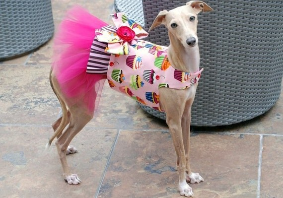 Candy's Sweet Dreams Tutu Harness Dog Dress - KOCouture