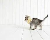 Kitten Photography, Unisex Nursery Decor, Minimalist Wall Art for Kids, White & Yellow, Baby Animal Photography, Kitten Picture 5x7 Print - AmyTylerPhotography