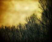 Autumn decor, Halloween photo, October forest, orange and black, bare trees, orange sky, fall photo, - NancyFalsoPhotos