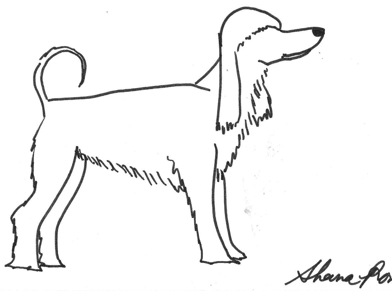 Afghan Hound Drawing