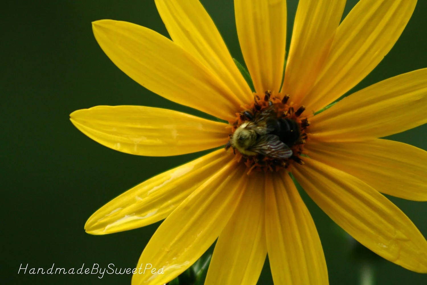 Yellow Flowers, Bee, Insect, Resting, Summer, Dreamy, Nature, Photography, Home Decor, Outdoors
