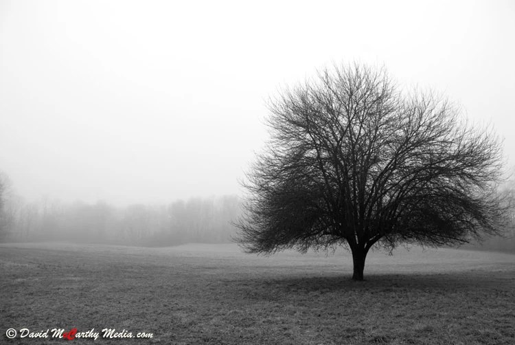 Foggy Tree -  An original 8x12 photograph - silhouetted apple tree alone in a misty field - black and white - fine art photography