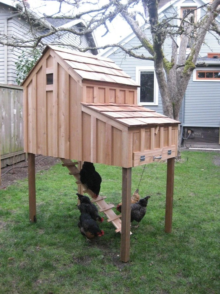 Saltbox Chicken Coops