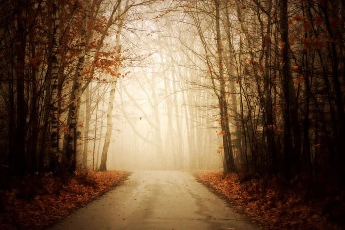 Silent Path - 10x15 Fine Art Photograph Autumn Halloween fall foliage