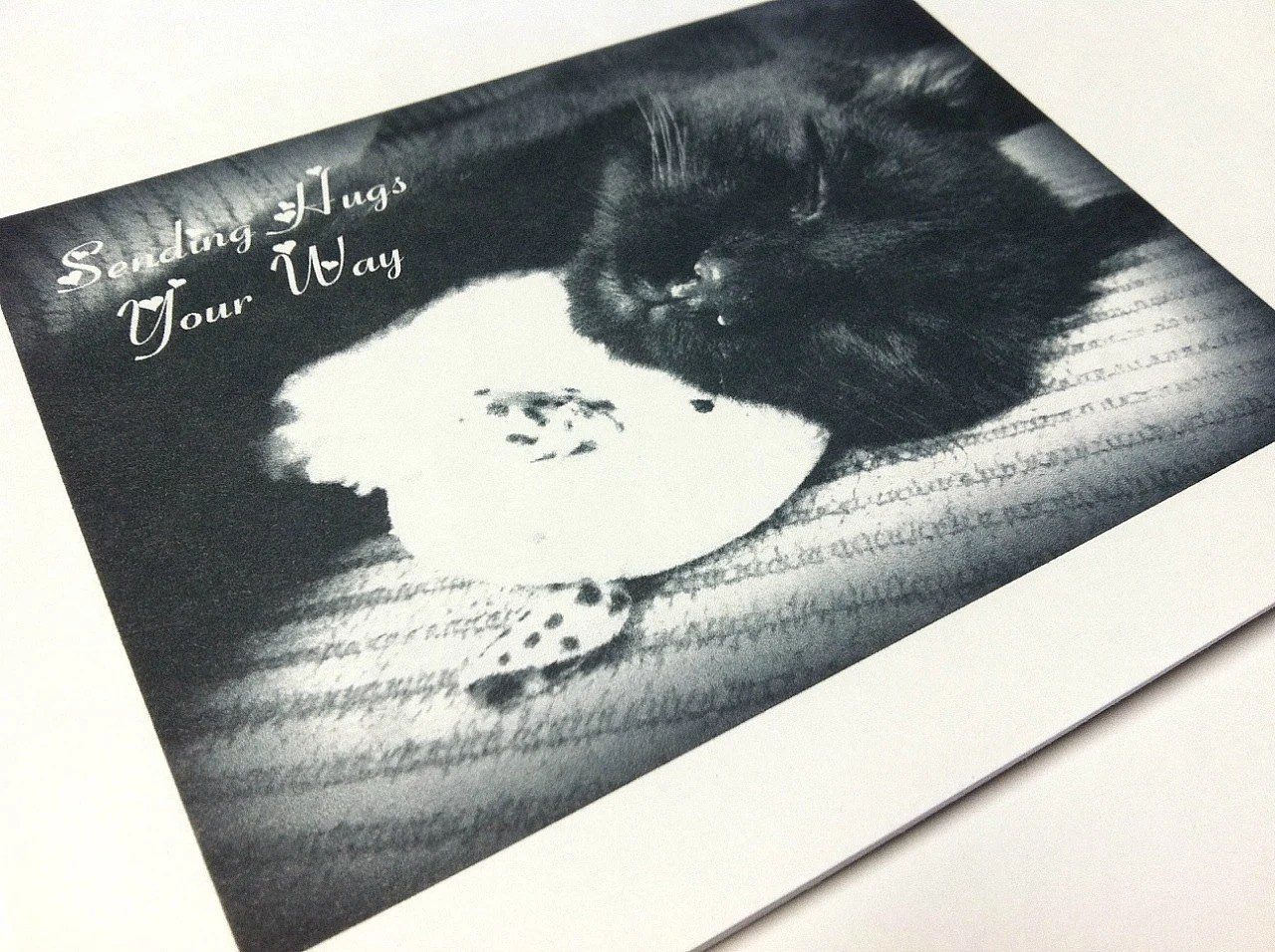 Flat Notecard Set of 5 Black Cat Love Black and White Matte Photo Card
