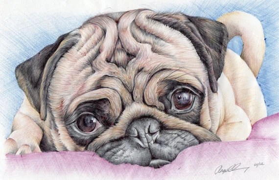ACEO MAGNET PUG. Magnet print of my original pug ball point pen and ink drawing