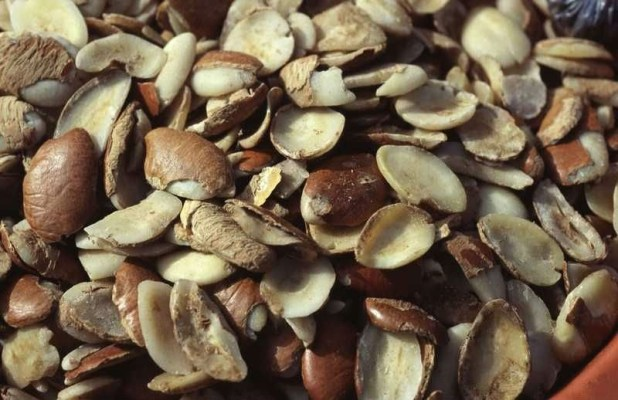 irvingia gabonensis seed Manufacturer in Littoral Douala Cameroon ...