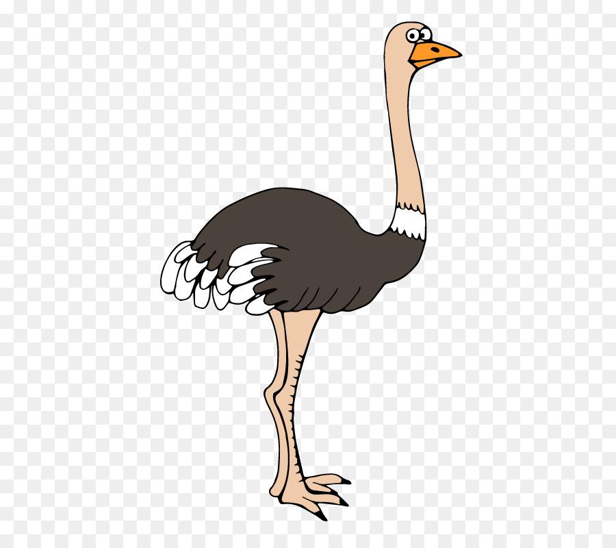Unduh 99+ Gambar Burung Unta Kartun Terbaru Gratis