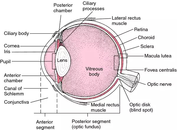 Pink Eye | definition of Pink Eye by Medical dictionary