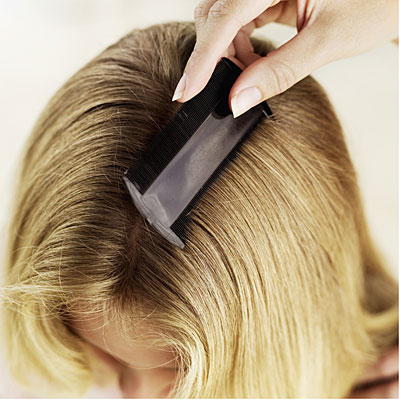 nitpicking and bing how to rid of head lice health