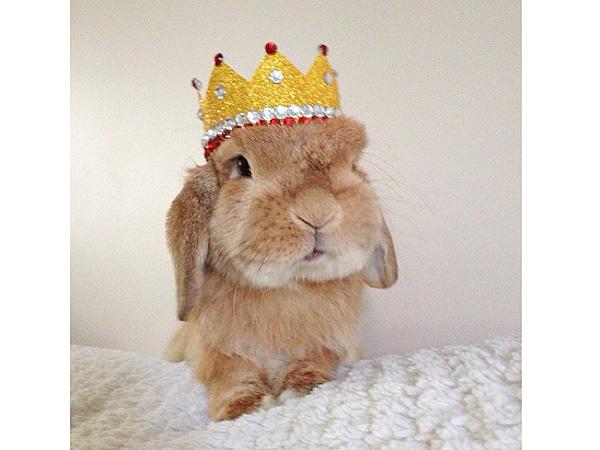 Instagram Rabbit, Bunnymama, Rambo: Photos