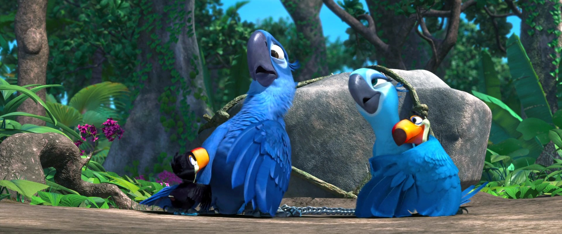 image rio movie wallpaper blu and jewel with rafael s kid png