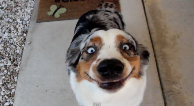 enhancedbuzz26251136380 - #Fotos 33 perros totalmente descontrolados