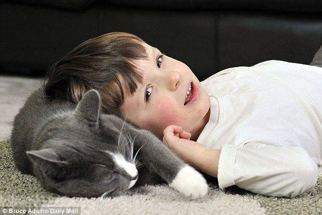 frasergato - Billy, un gato abandonado y adoptado que ayuda cada dia a un niño autista