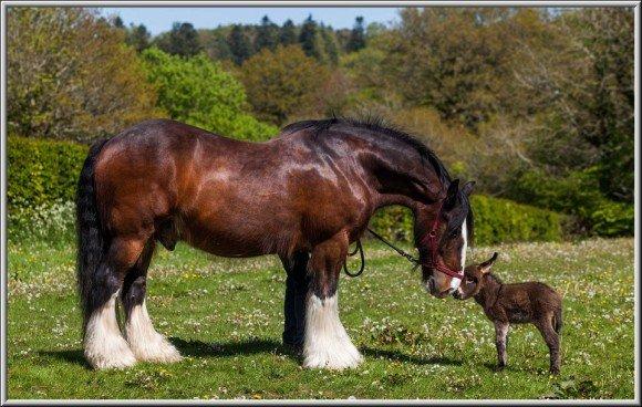 Pferd und Eselchen