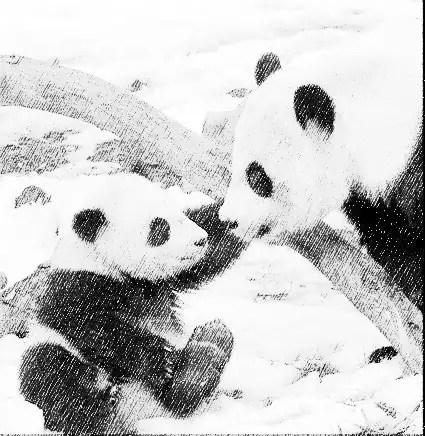 panda&pa