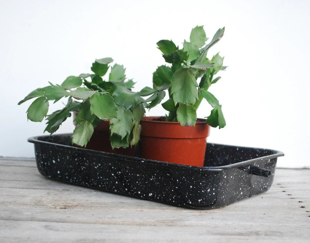 Black Splatterware Pan Enamelware with Spout Rectangular Laboratory Garden Greenhouse - cabinwindows