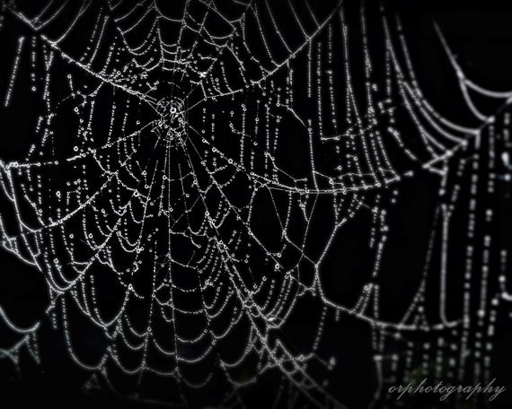 SHE Calls It HOME, an arachnid 8x10 print - LANDofLIV