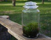 Moss Terrarium -  Candle Holder, Green, Garden, Summer, Woodland - 8daysOfTreasures