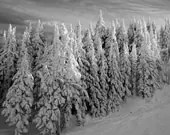Winter Home Decor 8x10, Black and White Landscape Photography, Ski Lodge Decor, Christmas Nature Fine Art, Snow Picture - PureNaturePhotos