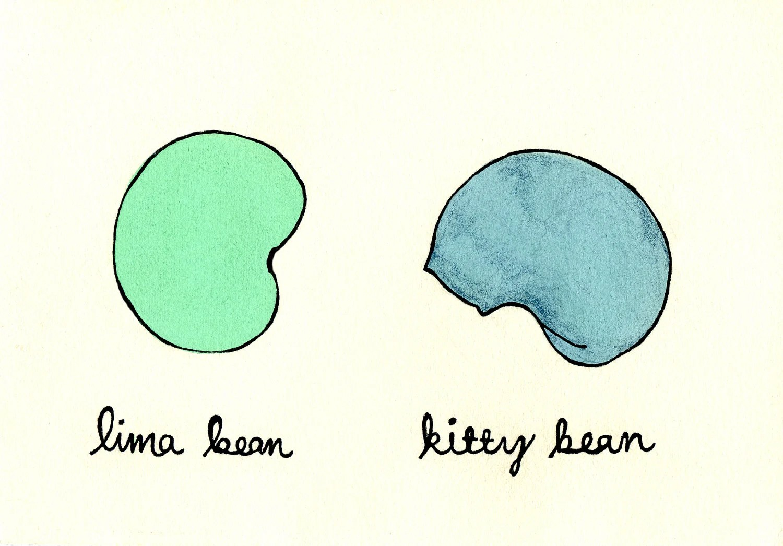 Kitty Bean PRINT - missmarjorie