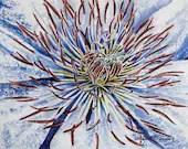 Clematis Flower, Barbara Rosenzweig, Art Print, Etsy - BarbaraRosenzweig