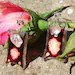 Hand painted original glass earrings SWEET ROSES decorated with a special stone in light pink