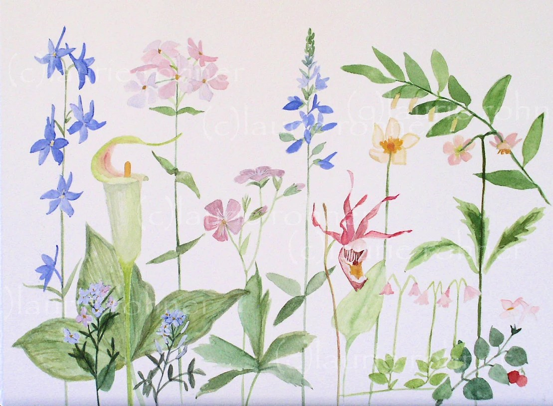 Original Watercolor Painting Illustration of Woodland Flowers