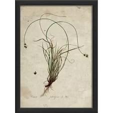 Botanical Framed Art