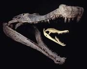 Sarcosuchus