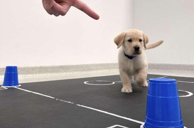 실험에 참여한 강아지. [미국 에리조나대 제공. 재판매 및 DB금지]