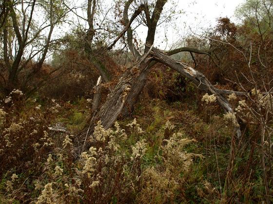 Huertos en el pantano Dunakeszi, foto cortesía de Péter Pacsuta