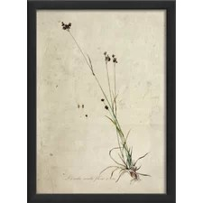 Botanical Framed Art