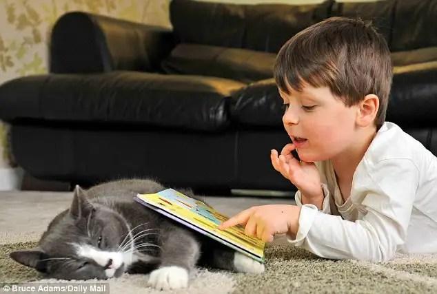 gatoayudanino - Billy, un gato abandonado y adoptado que ayuda cada dia a un niño autista