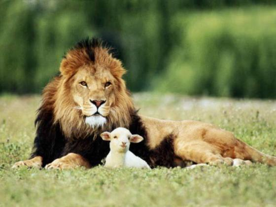 Wordless wednesday 14# (Lion and the Lamb), wordless wednesday , wordless, hari rabu tanpa kata-kata,
