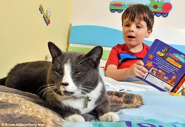 gatoayudaautismo - Billy, un gato abandonado y adoptado que ayuda cada dia a un niño autista